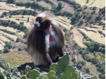 Debre Libanos monastery and Blue Nile Gorge (One day / two days trip from Addis Ababa)
